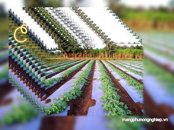 Đi tìm định nghĩa chính xác nhất về màng phủ nông nghiệp