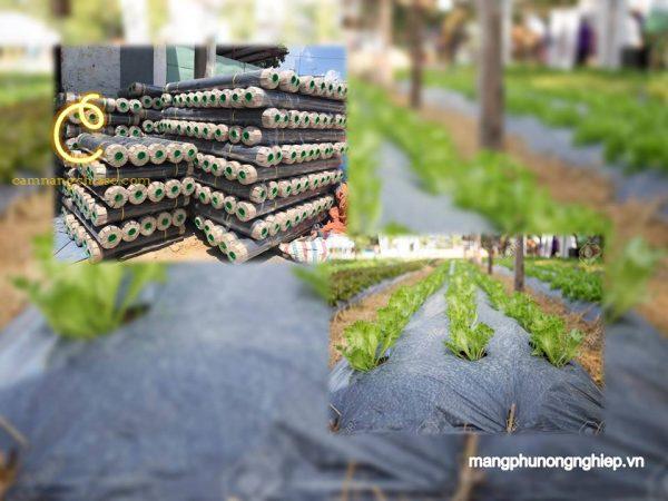Công dụng của màng phủ nông nghiệp đối với mùa màng